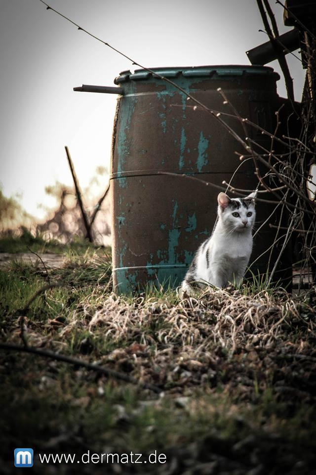 Katze bei einer Regentonne