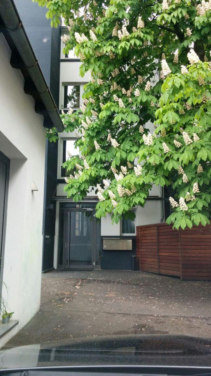 mzentrale - Magento Stammtisch Stuttgart