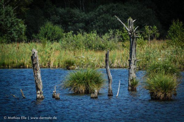 Stämme im Wasser - Schwenniger Moor