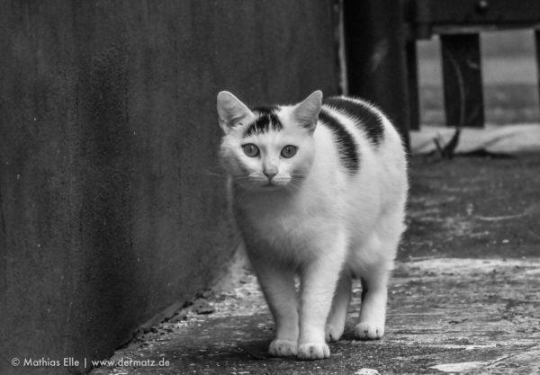 Katze Telezoom
